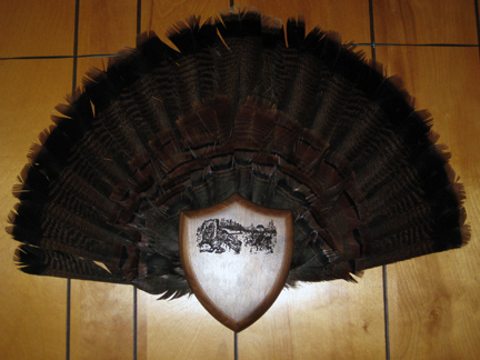 Larin Taxidermy NH | Turkey Tail Feathers